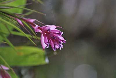 foto flor